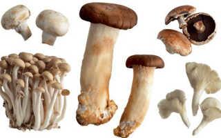 Польза грибов для организма человека
