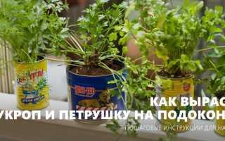 Укроп и петрушка на подоконнике – как вырастить салат в квартире?