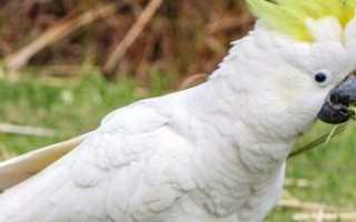 Видео, где попугай говорит: Наташа, закрой окно, мне холодно