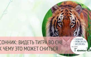 Тигр во сне к чему снятся мужчине – к чему снится тигрята?