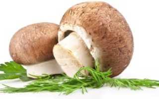 Срок хранения замороженных грибов в морозильнике
