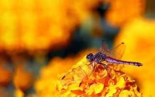 Басня Крылова стрекоза и муравей мораль басни