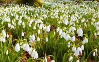 Когда цветет ландыш в каком месяце?