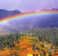 Видеть во сне радугу к чему