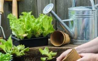 Что можно посадить в июне на даче: растения для сада, огорода и цветника