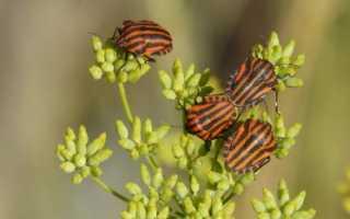 К чему снится жук большой черный, к чему снятся короеды?