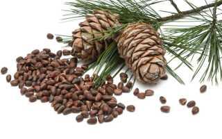Скорлупа кедрового ореха лечебные свойства и противопоказания