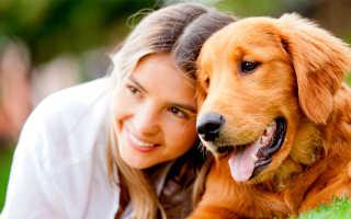 Обработка от эктопаразитов для собак какие есть – собачьи таблетки от глистов
