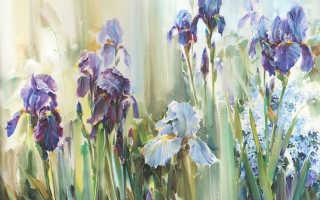 Рисовать цветы акварелью пошагово для начинающих, нарисовать ирисы