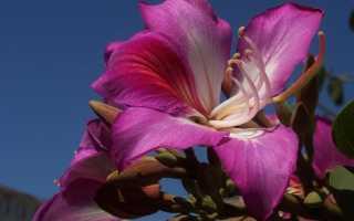 Цветы Индии – священный цветок индусов