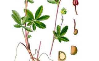 Лечебные свойства сабельника и его применение, сабля трава