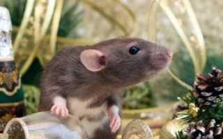 Что ждет вас в год Крысы по восточному гороскопу