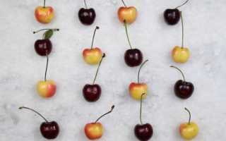 Чем отличается вишня от черешни – нет вишень или вишен?