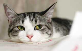 У кошки лезет шерсть клоками что делать – что дать коту?