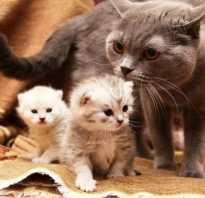 Какой срок беременности у кошек: УЗИ беременной кошки фото