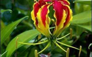Самый дорогой цветок в мире