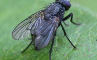 Сон мухи много в доме летают, к чему снятся мушки?
