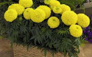 Балконные цветы фото и названия: растения для лоджии