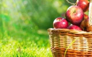 Яблочный Спас 2019 года: какого числа будет, что нужно и нельзя делать
