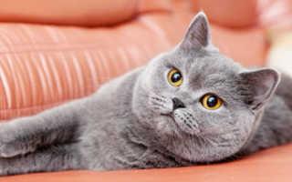 Чихает кот что делать в домашних условиях, причины чихания у кошек