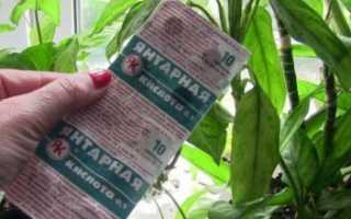 Янтарная кислота для комнатных растений, в том числе орхидей: как правильно применять