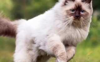 Чипирование кошек: что это, как делают процедуру, в каком возрасте ее проводят, преимущества и недостатки имплантации чипа животному