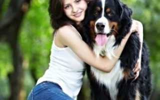 Как определить возраст собаки по человеческим меркам: перевод собачьих лет