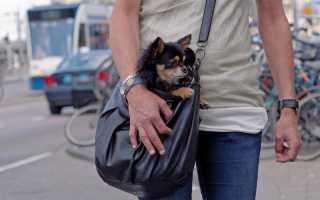 Можно ли в метро с собакой?