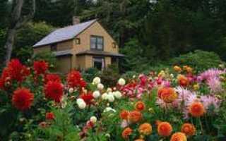 Цветник у дома — клумбы с георгинами фото