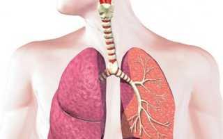 Какие органы входят в дыхательную систему, схема дыхания человека