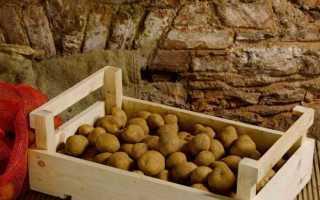 Хранение картофеля в домашних условиях, в том числе зимой: температура и условия