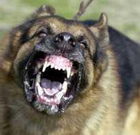 Какая самая опасная собака в мире