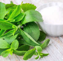 Листья стевии лечебные свойства и противопоказания – леовит польза и вред