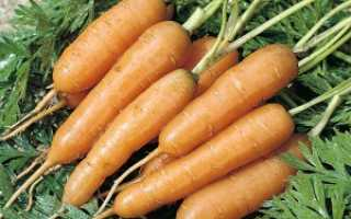 Загадки про морковь для детей
