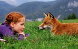 Какую пользу приносят домашние животные людям