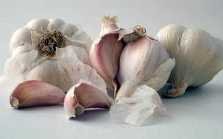 Чесночная шелуха польза и вред для организма