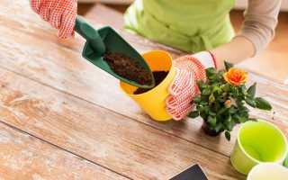 Как правильно посадить цветок в горшок, как садить цветы?