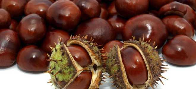 Что такое каштаны и как их едят, каштановый орех как есть