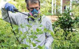 Строби фунгицид инструкция по применению для винограда
