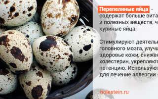 Есть ли холестерин в перепелиных яйцах?