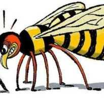 Последствия укуса осы – сколько времени болит?