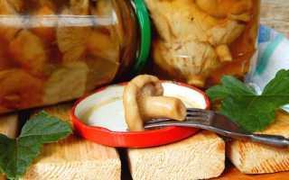 Волнушки грибы фото как готовить: как посолить волжанки?