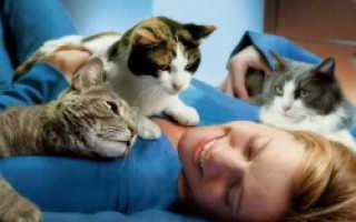 Чрезмерная любовь к кошкам, что такое айлурофилия
