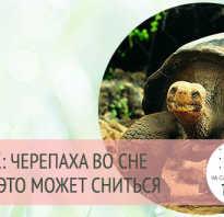 К чему снится черепаха женщине большая: к чему снятся много маленьких черепашек?