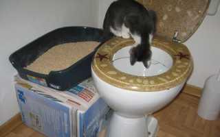 Как приучить кошку к унитазу после лотка: уникот своими руками
