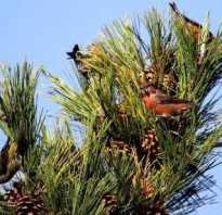 Какая птица выводит птенцов зимой ответ – когда рождаются клесты?