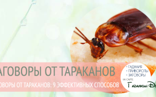 Заговор от тараканов читать в любое время – молитва от насекомых в квартире