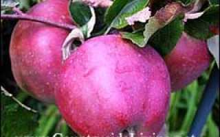 Уксус из яблочного сока в домашних условиях