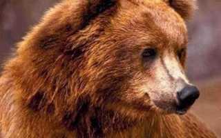 Священное животное в России – символика народов мира