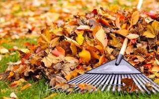 Нужно ли собирать листву в саду осенью?